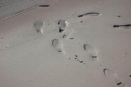 Footprints in the sand at Magdalena Bay, Spitzbergen